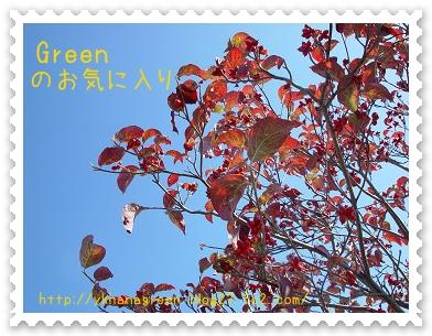 350hanamizukimi1107b4.jpg
