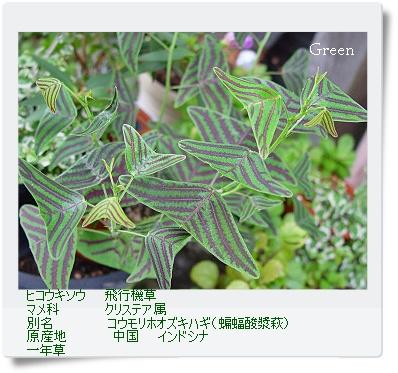 350hikoukisou0902a4.jpg