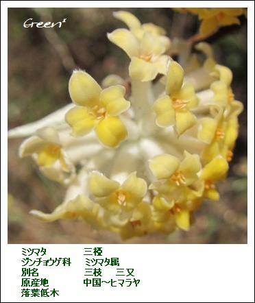 350mitumata20110421d1.jpg