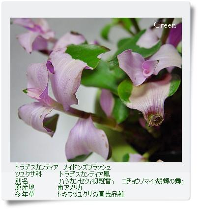 350torakanfuru0315a1.jpg