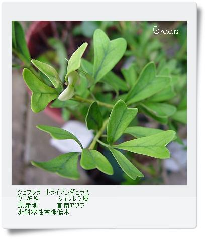 350toranangurasu80925a2.jpg