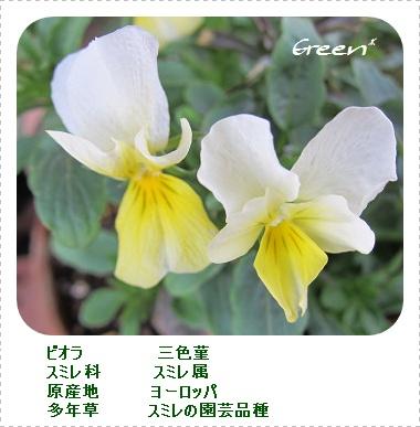 350violaki20110421c1.jpg