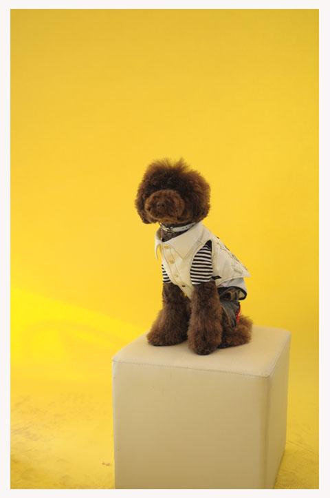 dogfan100129001.jpg