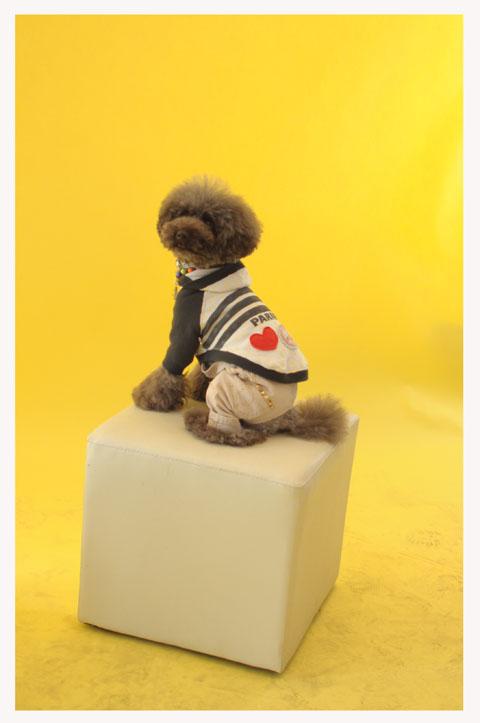 dogfan100129002.jpg