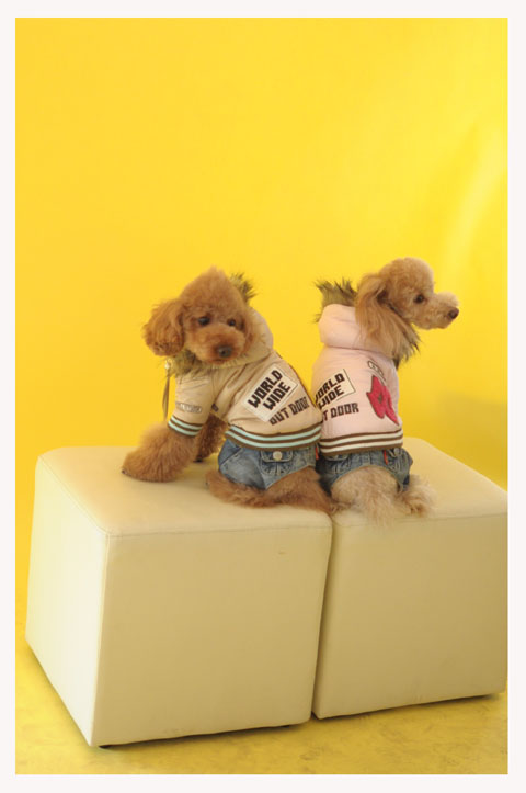 dogfan100129003.jpg