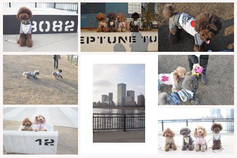dogfan100129012.jpg