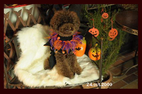 halloween200901.jpg