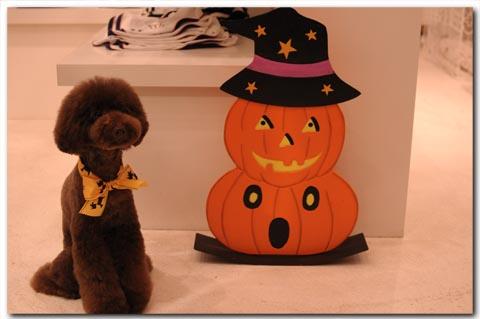 halloween2010003.jpg