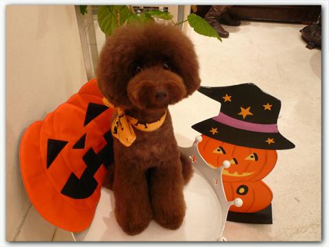 halloween2011.jpg