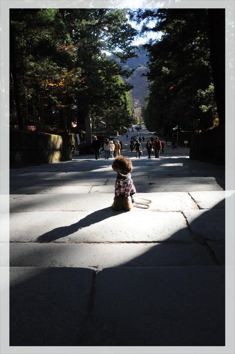nikkou20111124002.jpg