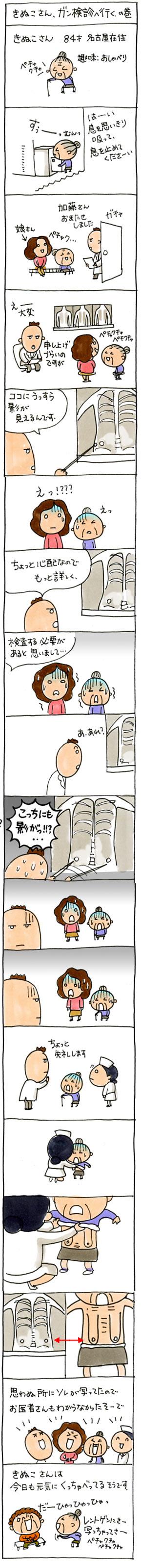 きぬこさん