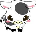 2009 赤ちゃん牛