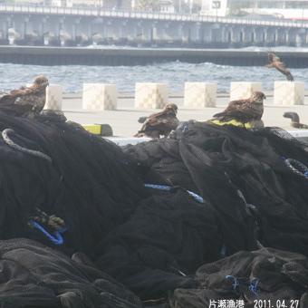 片瀬漁港0261