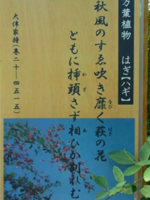 090_20111025204132.jpg