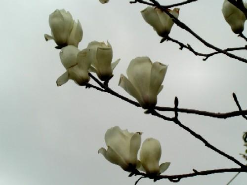 画像 082