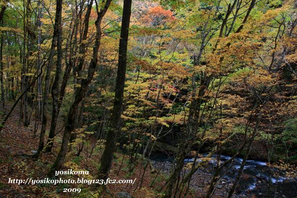 横川渓谷2