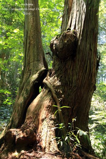 森のクマさん1
