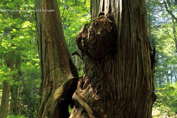 森のクマさん2