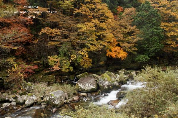 桧原川の紅葉1