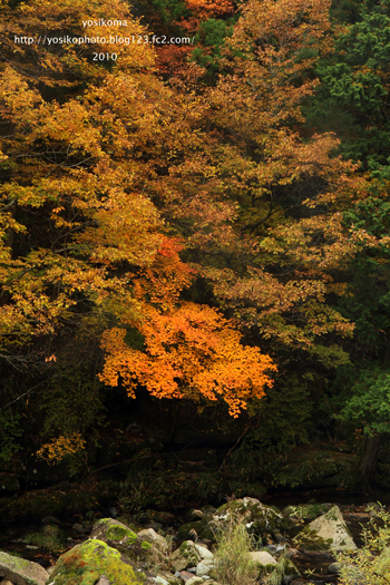 桧原川の紅葉2