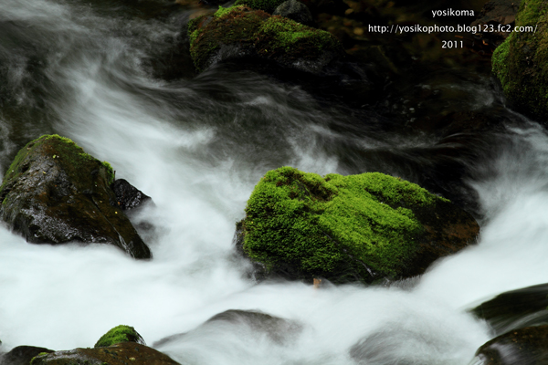 自然園の滝2