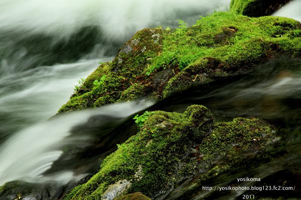 自然園の滝3