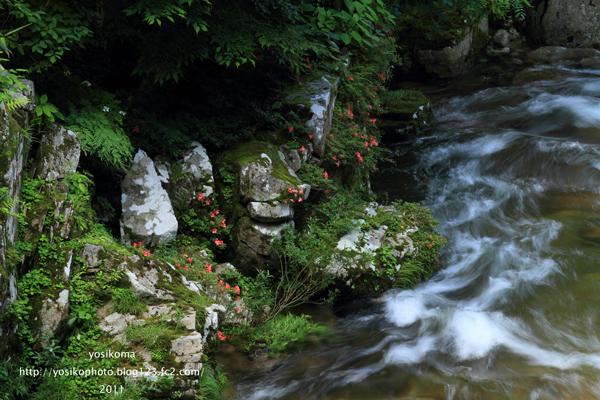 岩ツツジ3