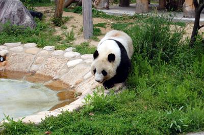 王子動物園7