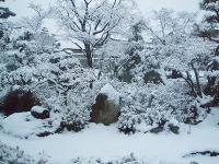 冬らしい雪H210223