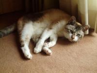 老猫タローH210727