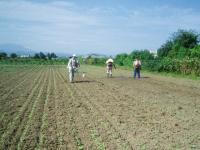 ソバ畑除草剤H210822