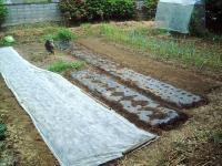 秋野菜の植え付けH210914