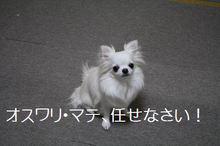 IMG_1689.jpg