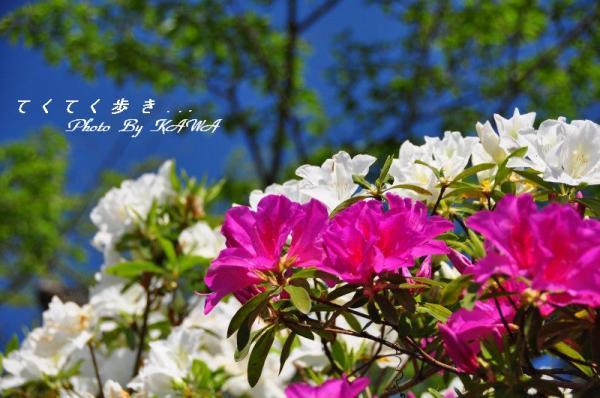 8冨士山_5428