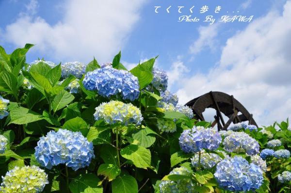 13安並_7690