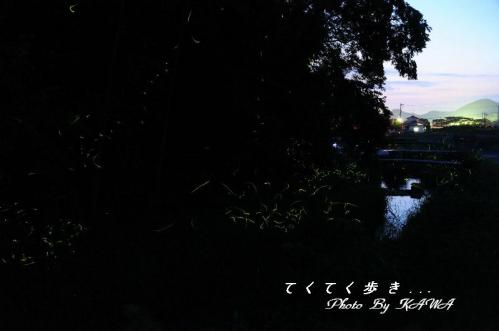 2北条ホタル_8015
