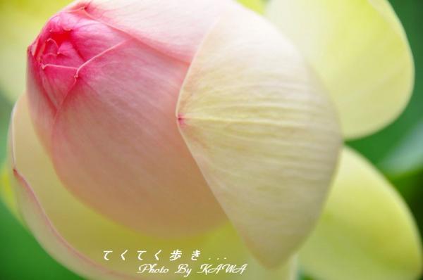 1浄瑠璃寺_9051
