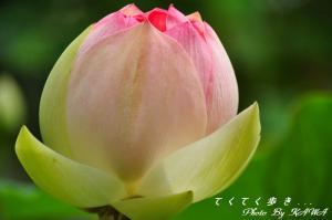 3浄瑠璃寺_9048