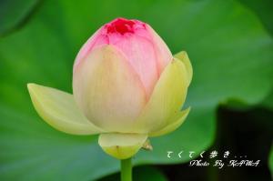 6浄瑠璃寺_9056