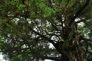 9浄瑠璃寺_9070