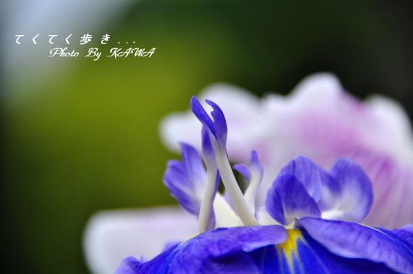 1浄瑠璃_9086