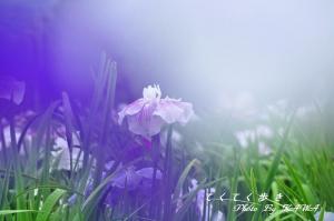 6浄瑠璃_9120