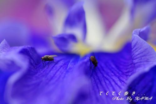 8浄瑠璃_9129
