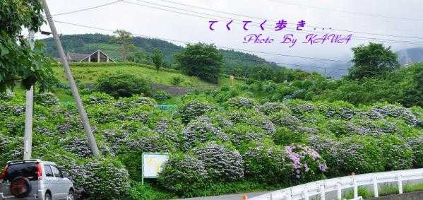 2双海_9456
