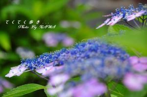 5双海_9474
