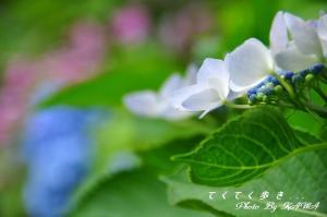 6双海_9462