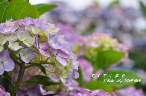 7双海_9457