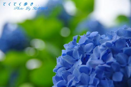 8双海_9493