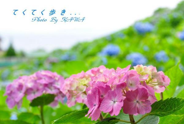 10双海_9478