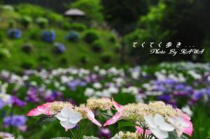 7白猪_9599